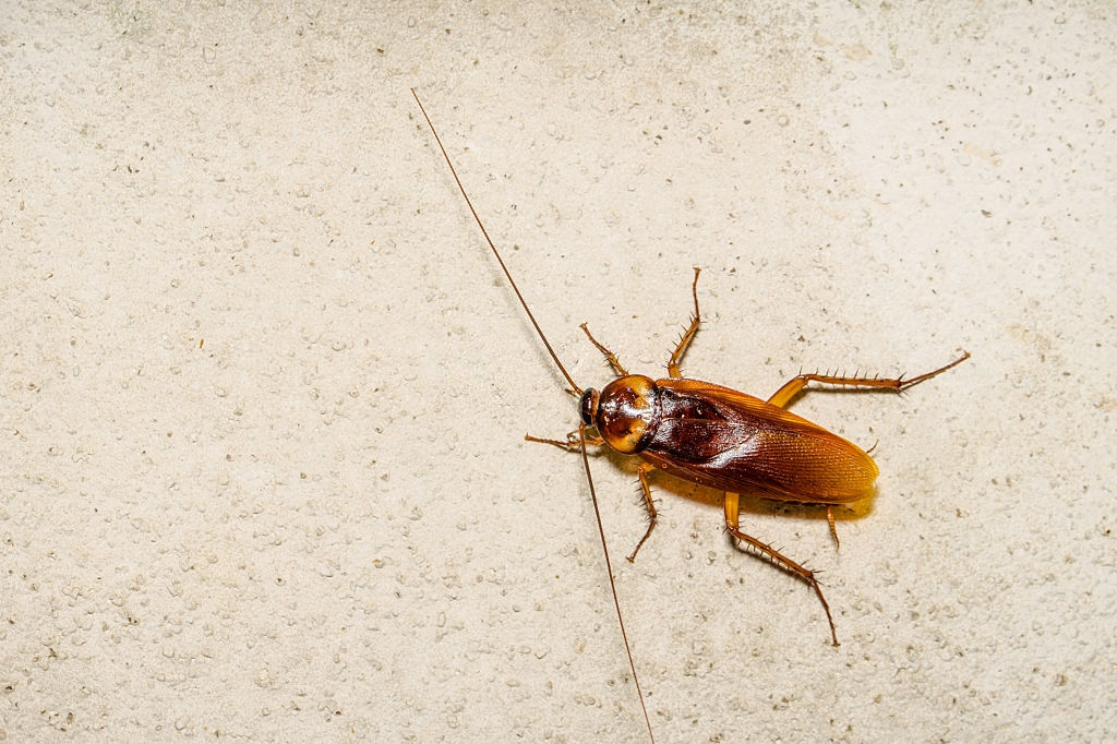 Cockroach Control, Pest Control in Swiss Cottage, NW3. Call Now 020 8166 9746