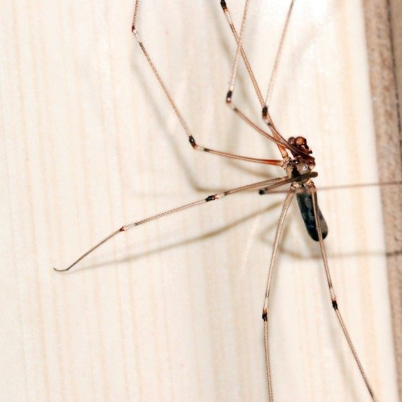 Spiders, Pest Control in Swiss Cottage, NW3. Call Now! 020 8166 9746